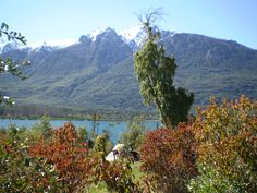 Paisaje florido del Lago Epuyén, en octubre.
