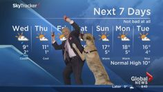 Video of Mike Sobel and Ripple the dog's weather forecast goes viral