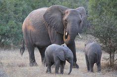 https://flic.kr/p/N6Hxwc   Elephant family