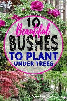 Great list of bushes that will grow under trees. I love these shrubs that thrive in the shade. They will be perfect for the shady garden in my backyard. #fromhousetohome #perennials #gardeningtips #gardenideas #shadeplants #shadegarden