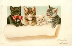 three cats & a kitten with paws up on a sheet of paper