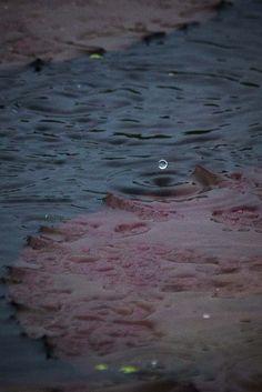 """""""Raindrop""""  01.Aug.2014  サマーキャンプ最終日は台風の影響で雨! 千町無田のお池で、偶然こんなショットも〜♪  ココは楽し♡"""