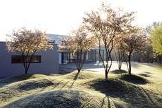 Rasenskulptur im Morgenlicht - Architecture Diy