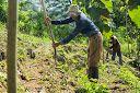 Papaya planting in Permalife Farms, Naturewalk, Costa Rica http://costarica-invest.blogspot.ie/2014/09/papaya-in-naturewalk.html