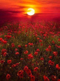 10 Amazing landscape pictures of flower field - Newspandas Beautiful Sunset, Beautiful World, Beautiful Flowers, Beautiful Places, Beautiful Beautiful, Beautiful Morning, All Nature, Amazing Nature, Red Poppies