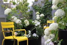 Parisian terrace with white flowers - yellow fermob luxembourg chairs