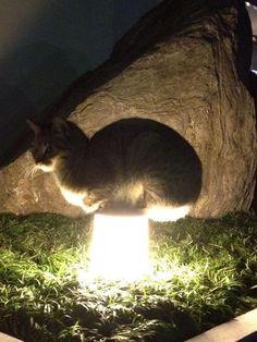 【マジかよ】 近所の猫が、今年も斬新な暖の取り方をしてる件 (画像あり) wwwwwwwwwww : 〓 ねこメモ 〓