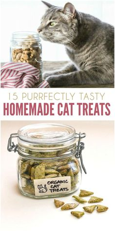 If you have a cat, you know how irresistible it is to pamper them. From toys to treats, it seems we're always looking for something to spoil them with. Why not make your favorite feline a few of these homemade cat treats? You'll find crunchy snacks, chewy Cat Recipes, Dog Food Recipes, Homemade Cat Food, Homemade Baby, Cat Dog, Pet Treats, Kitten Treats, Healthy Cat Treats, Diy Stuffed Animals