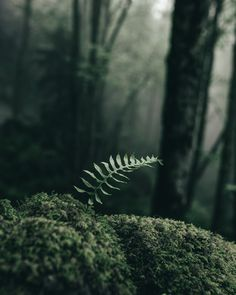 Don't Forget About The Little Things - Details in the forest.