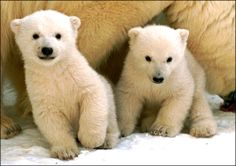 I swear the bear on the left is smiling.
