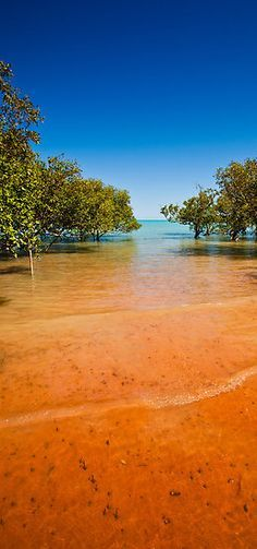 Blue Sky, Red Sand by aabzimaging. Mangroves at Roebuck Bay in Broome, Western Australia