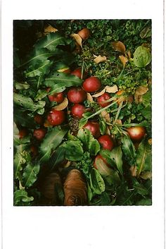 brogues and apples