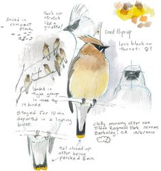 A new guide to bird drawing inspires a deeper connection with nature.
