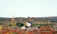 Hunting Guide, 100 Yards, Big Game, Ranges, Gun, Shots, Mountains, Places, Nature