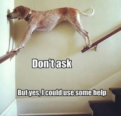#Dog looks like it could use some help!