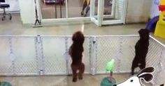 Dog Vom Funny Gif #4101 - Funny Dog Gifs| Funny Gifs| Dog Gifs