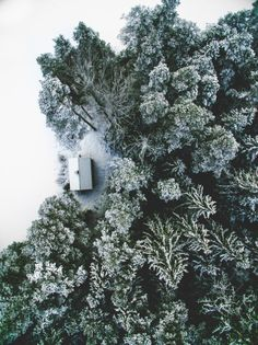Cottage in the forest at winter time. Northern parts. Cold. Dark. Scandanavian.