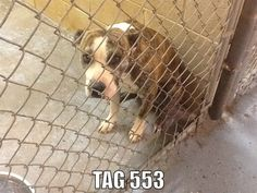 PLEASE HELP SAVE ROGER! | Pet Expenses - YouCaring.com Only $87 raised of $300 needed. He has NO CHANCE without your help. ONLY 6 DAYS LEFT TO RAISE, He is in a gassing shelter in Shelby, NC!!!  Please help.