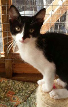 Bruce www.wearvalley.cats.org.uk #catsprotection #adoptacat #darlington