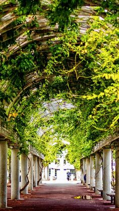 A walk through a beautiful arbor in Boston.  Click to see more beautiful photos