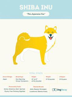 Also Known As: The Japanese Fox, Foxy, Japan's Fox Area of Origin: Japan Breed. Doge Dog, Dog Cat, Shiba Inu, Siberian Dog, Japanese Dog Breeds, Chihuahua Terrier Mix, Japanese Fox, Animal Tracks, Most Popular Dog Breeds