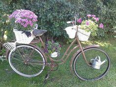 Vanha pyörä ja kukat❤