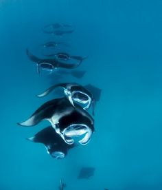 Dive Travel: The Best Time to See Mantas