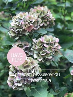 Havetips::: Sådan beskærer du Hortensia Green Pallete, Landscape Design, Garden Design, Green Garden, Outdoor Plants, Plant Decor, Tumblr, Garden Inspiration, Backyard Landscaping