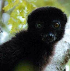 6a463e1f0736 27 Best Lemurs images