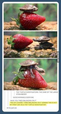 Tiny Turtle Investigators