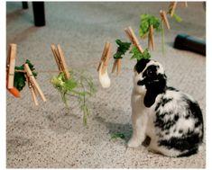 Diy Bunny Cage, Diy Bunny Toys, Bunny Cages, Diy Toys For Rabbits, Rabbit Treats, Rabbit Toys, Pet Rabbit, Rabbit Diet, Lionhead Rabbit