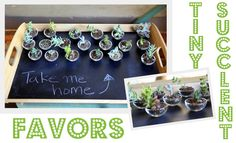 A vintage, woodsy baby-shower with little succulents as favors.