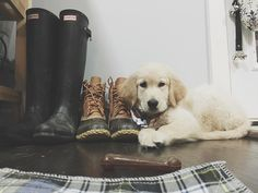 #indianajonesthepuppy  bean boots, hunter boots and my puppy. All things I love :)