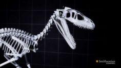 Prehistoric Kickboxing Killer Turkeys -Not Naked Lizards >>What Jurassic Park Got Wrong About Raptors: Real raptors had feathers.