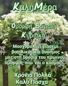 Herbs, Herb, Medicinal Plants