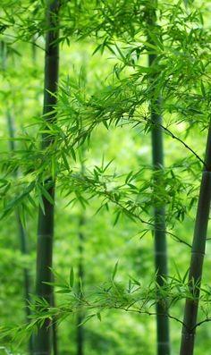 竹の新緑のiPhone壁紙 | 壁紙キングダム スマホ版
