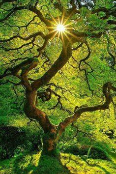 sun shining through a beautiful tree