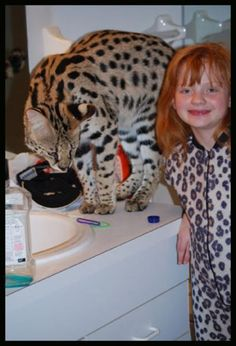 Savannah cat.... Because Big Cats are Awesome!