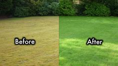 8 Secrets To Keep Your Lawn Always Green And Healthy - YouTube