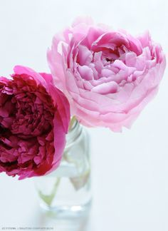 pink and cerise flowers