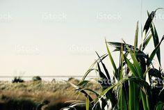 "Commercial KiwiArt on Twitter: ""#Soft #Dreamy #Harakeke New Zealand Flax #PhotoImage #NZ #Print in own #Style!  #Kiwi """