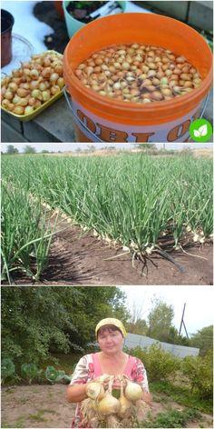 Growing Gardens, Farm Gardens, Hydroponic Growing, Hydroponics, Farm Layout, Design Jardin, Potager Garden, Vegetable Garden Design, Garden Items