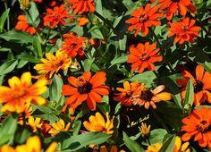 Floral Friday Fotos 18/2016