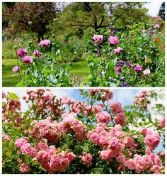 Claude Monet Garden - Elodie Perrier Designs - Blog