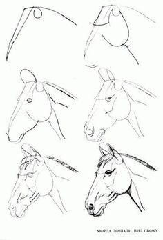 Learn to draw step by step: animal - horse head (side view) - . - Joyeux - Learn to draw step by step: animal – horse head (side view) – … - Horse Head Drawing, Horse Drawings, Doodle Drawings, Art Drawings Sketches, Animal Drawings, Cute Drawings, Drawing Animals, Simple Horse Drawing, Easy Pencil Drawings