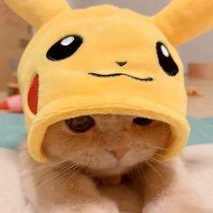 Cute Baby Cats, Cute Little Animals, Cute Cats And Kittens, Cute Funny Animals, Kittens Cutest, Cute Dogs, Gatos Cool, Cute Cat Memes, Cute Cat Wallpaper