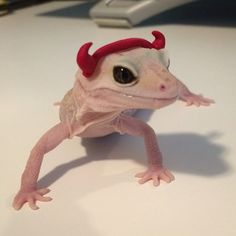 Devil Cute Funny Animals, Cute Baby Animals, Animals And Pets, Cute Dogs, Leopard Gecko Cute, Cute Gecko, Cute Reptiles, Reptiles And Amphibians, Cute Lizard