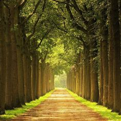 Love a road covered with a canopy of trees!