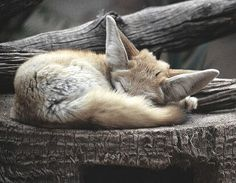 sleepy//