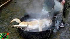 The dog meat festival in Yulin, southern China takes place every year on June 21st, to mark the summer solstice, a day with ...
